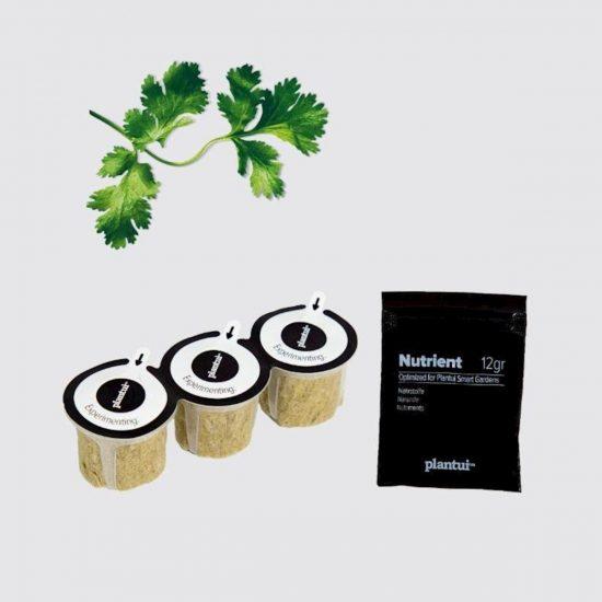 Kapsule s semeni Plantui koriander (Coriander)