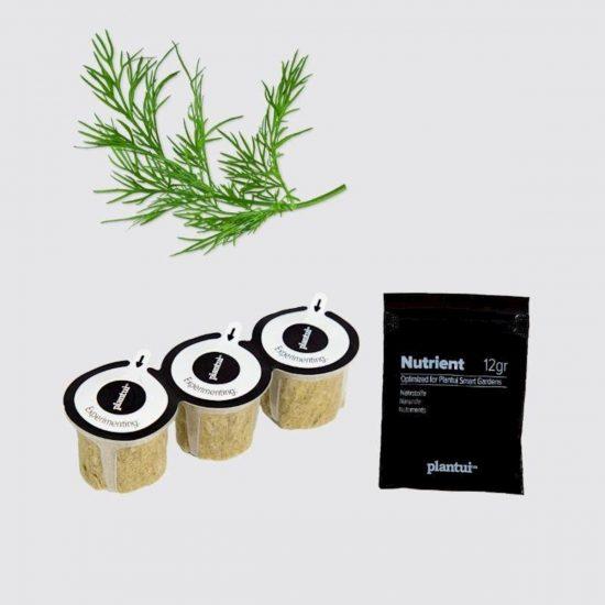 Kapsule s semeni Plantui koper (Dill)