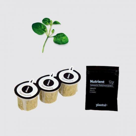 Kapsule s semeni Plantui origano (Oregano)