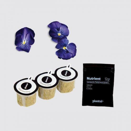 Kapsule s semeni Plantui modra vijolica Viola True Blue