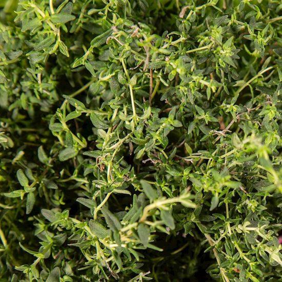 Kapsule s semeni Plantui timijan (Thyme)