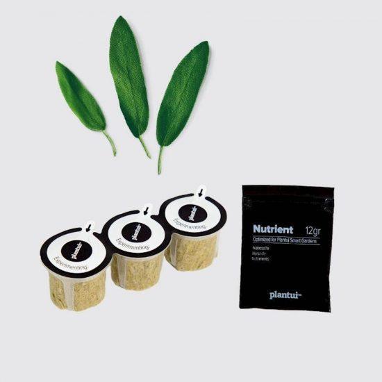 Kapsule s semeni Plantui žajbelj (Sage)